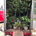 Plants in Truck
